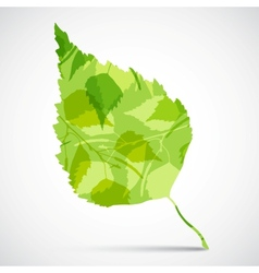 Concept background of green birch leaf vector image