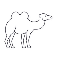camel line icon sign on vector image