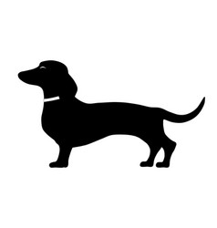 dachshund standing side pose vector image