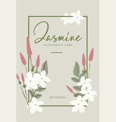 jasmine flower banners design for tea vector image