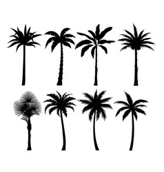 palm trees silhouettes set vector image