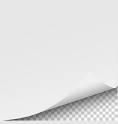 sheet of white paper with curled corner vector image