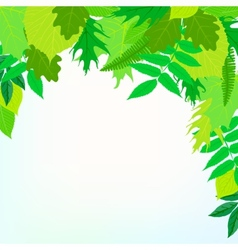 Spring card background with green leaves vector image