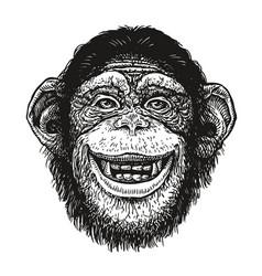 hand drawn portrait of chimpanzee funny monkey vector image