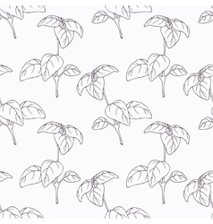 Hand drawn basil branch outline seamless pattern vector image vector image