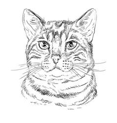 Monochrome bengal cat vector