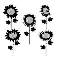 Set of sunflowers silhouette 3 vector