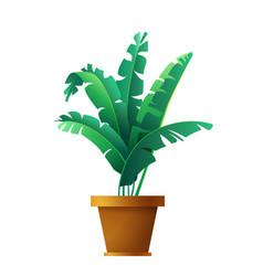 banana palm leaves botanical exotic tropical vector image