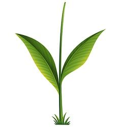 A green plant vector