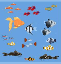 exotic tropical aquarium fish different colors vector image