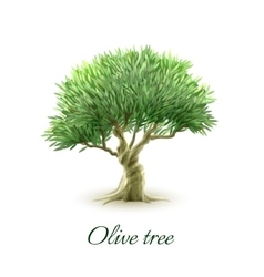 Single olive tree picture print vector