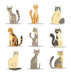 collection of different cats breeds cute pet vector image