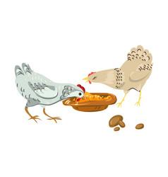Cute farm chickens eating eco natural grains vector