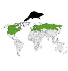 Distribution beaver vector