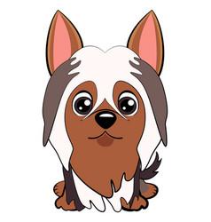 dog silky cartoon vector image
