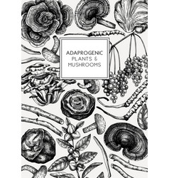 Medicinal plants and mushrooms hand-sketched vector