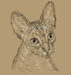 Sphynx cat on brown background vector
