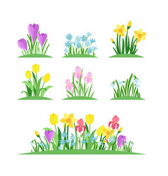 spring flowers flat set vector image