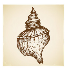 Vintage hand drawn seashell isolated vector