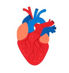 Anatomical heart cartoon icon vector