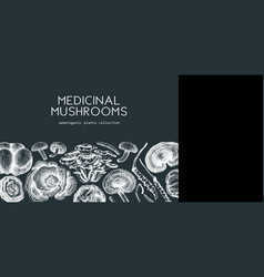 Medicinal mushroom background on chalkboard vector