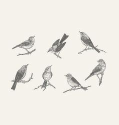 set with birds black and white vector image