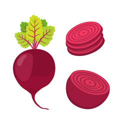 Beetroot and slices cartoon flat style vector