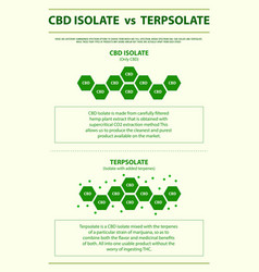 Cbd isolate vs terpsolate vertical infographic vector