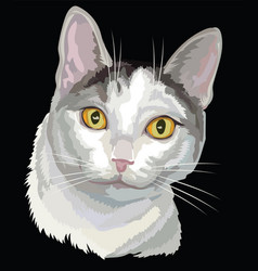 colored cat white and grey color vector image