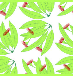 eucalyptus on white background vector image
