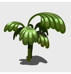 Green exotic plant with large leaves image vector image