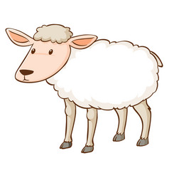 white sheep standing on background vector image