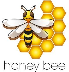 honeybee vector image