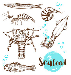 hand drawn fish squid and shrimp vector image