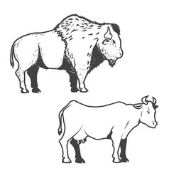 cow and buffalo icons isolated on white vector image