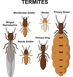 cartoon type of termites collection set vector image