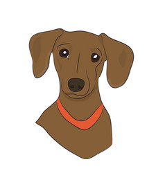 Dog portrait profile dachshund look down vector
