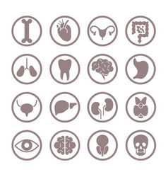 human organ icons lungs and kidneys heart vector image