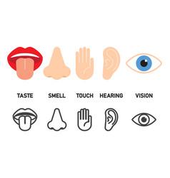 Icon set of five human senses vector