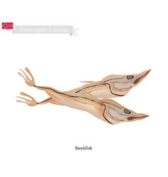 Stockfish or fish unsalted a popular food in norw vector