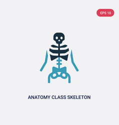 Two color anatomy class skeleton icon from user vector