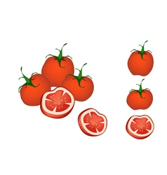 A Set of Delicious Fresh Red Tomatoes vector image vector image