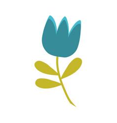 blue tulip flower spring vector image