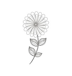 Camomile flower decoration line vector