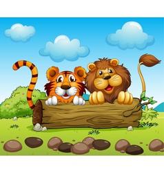 A lion and a tiger hiding vector image vector image