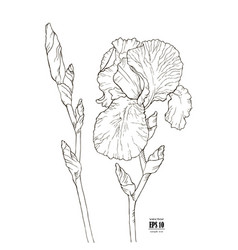 Black and white sketch of a flower of iris vector