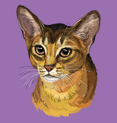 Colorful abyssinian cat vector