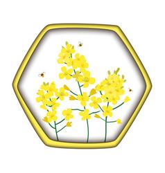 rape honey concept brassica napus rapeseed vector image