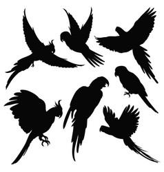 parrots amazon jungle birds silhouettes vector image