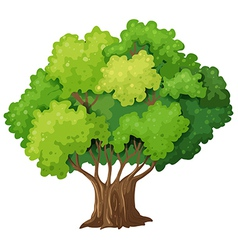 A big old tree vector image